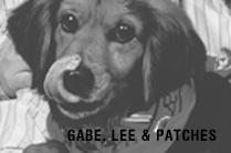 Gabe, Lee, and Patches
